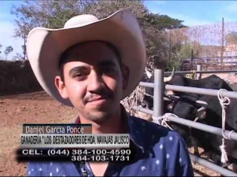 PRESENTACION DE LA PERCHA  - Los Destazadores de Daniel García 10-11-11  PRIMOVISION 2011.wmv