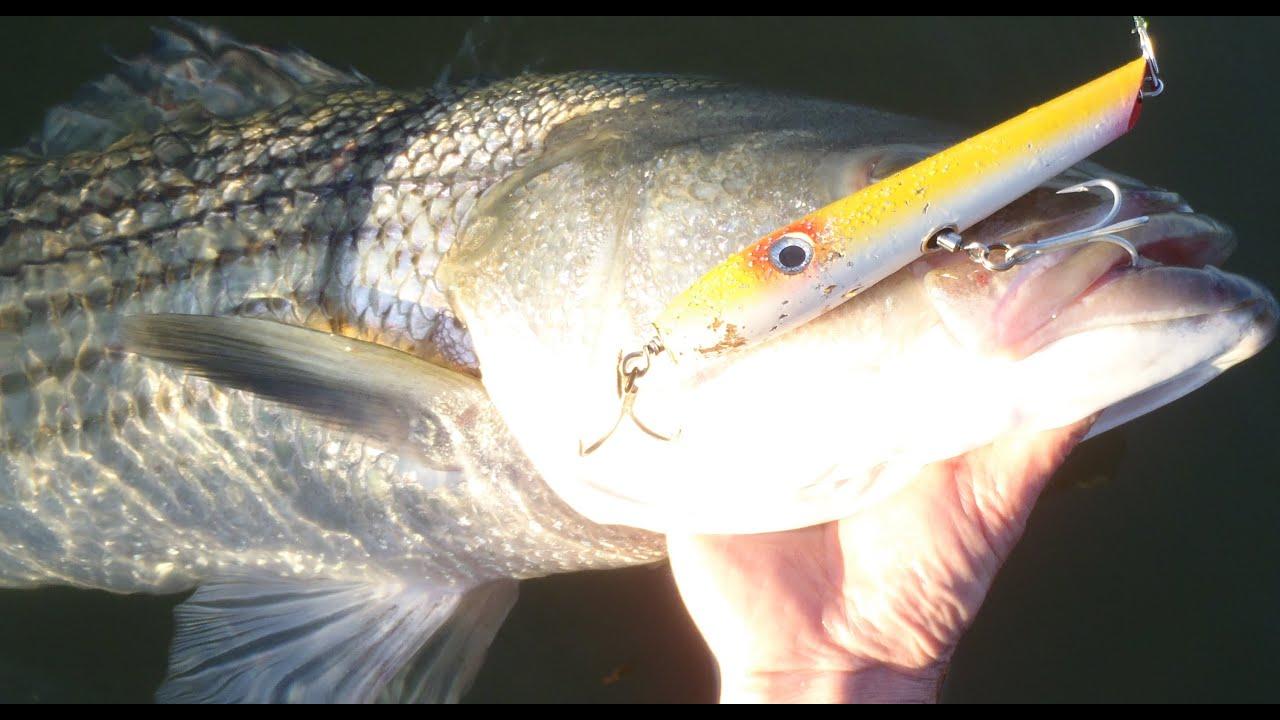 Surfcasting for striped bass gibbs pro series pencil for John skinner fishing