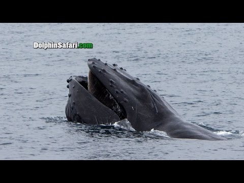 Warm Water Brings Whale-a-palooza to Southern California