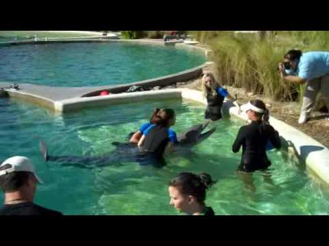 Swimming With Dolphins - Diplomat