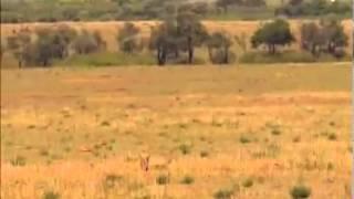 Thế giới động vật: Cuộc chiến sinh tồn (Phần 1) 2502