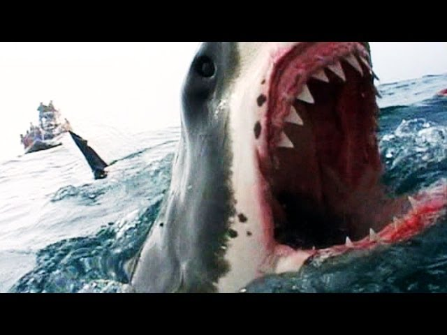 Naked Science - Shark Attacks
