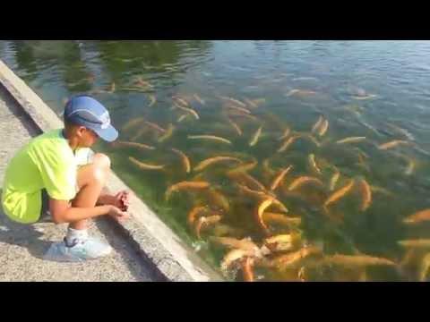 иркутск рыбалка фарель