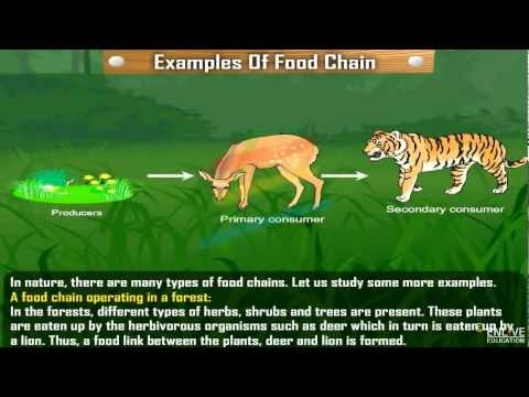 Examples of food chain - YouTube