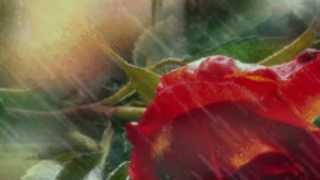 download lagu Newbirth Wildflower gratis
