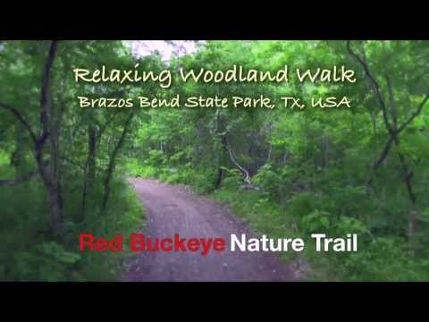 Red Buckeye Trail at Brazos Bend State Park, Tx, USA