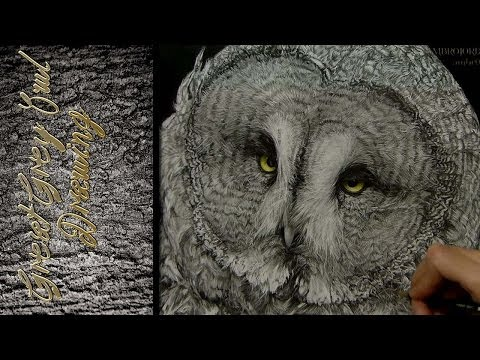 Great Grey Owl - Drawing