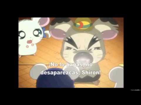 Hamtaro (Gran Jefe y Shiron)// Avril Lavigne -Slipped Away