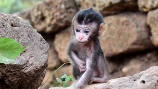 Lori baby monkey his look at lovely , Lori She looks so small very cute