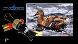 "Cadence Calls - ""The Closer"" Duck Call"