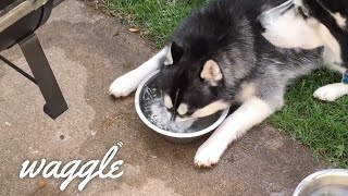 Happy Hour Pets | Funny Animal Compilation