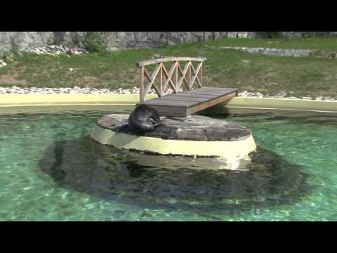 Wrocławskie Zoo Coraz Piękniejsze