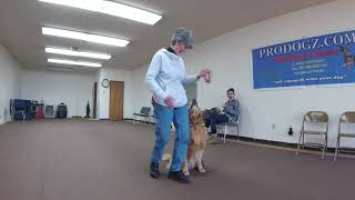 Prodogz Dog Training Presents: Competition heeling with Barb & Beemer.