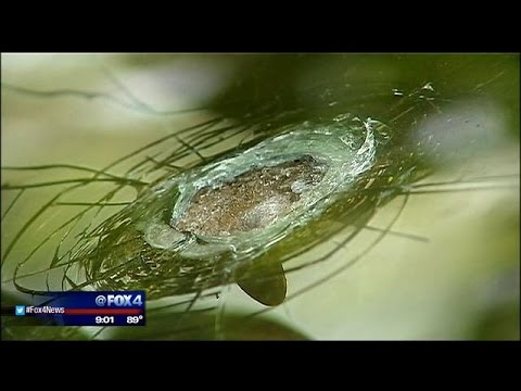 Car's 17-year-old windshield helps protect 2 from bullet