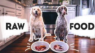Raw Food Diet for Dogs | BARF Diet | One year update