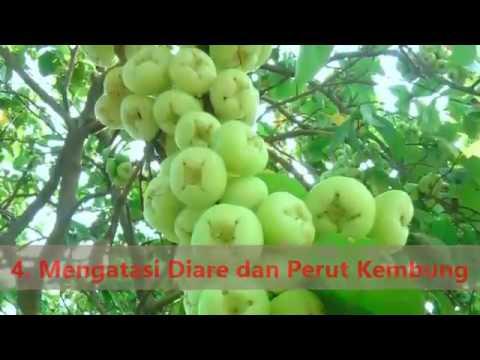 download lagu Viral Khasiat Buah Jambu gratis