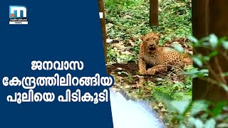 Leopard Strays Into Human Habitation, Trapped In Athirappilly| Mathrubhumi News