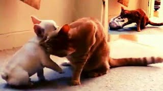 Super Funny BUT Failed Videos 2019 (Animals Edition)
