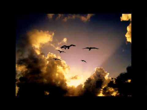 Pavel - Od svjetla i ptica