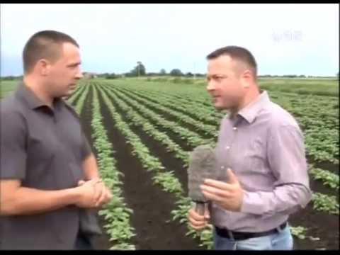 IMAC Potato Digger / IMAC masina za vadjenje krompira