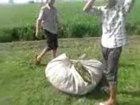 Harjinder Seerha Desi Kand video
