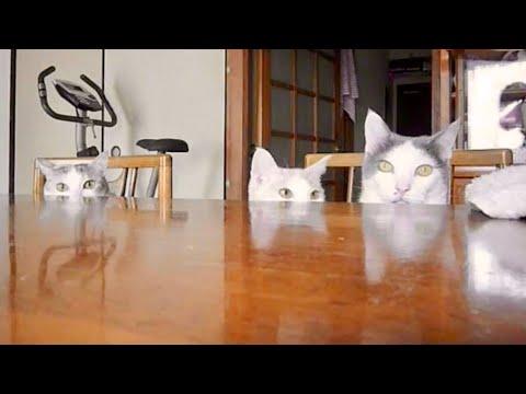 にゃんこの食卓  Table of cat