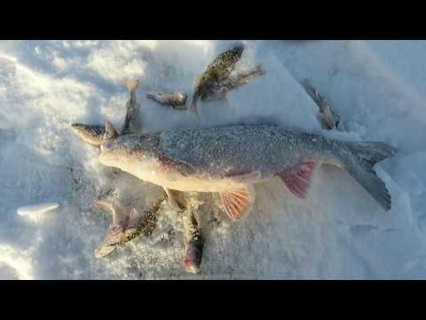 Зимняя рыбалка на блесну и балансиры в Перми