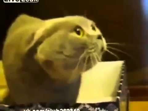 Кот Вызывает Демона! Говорящий кот! Ржач!