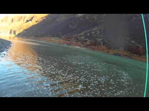 A steelhead dear John letter on the John Day River