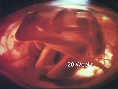 Pregnancy Fetal Development