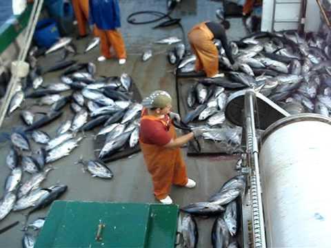 Pesca do Atum BigEye do Barco de Espinhel (Long Line) Elias Seif em Natal/RN
