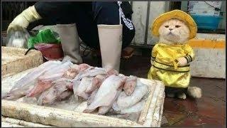 Chú mèo tên Chó, bán cá ở chợ Hải Phòng được lên trang nhất tạp chí nổi tiếng của nước ngoài