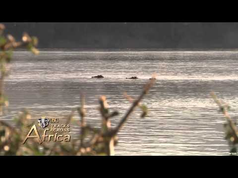 Dallas Safari Club's Tracks Across Africa - River Monsters