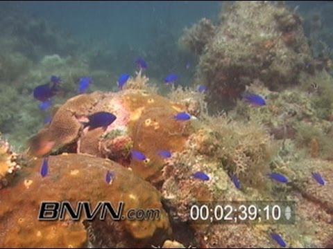 7/3/2005 Juvenile French Angels reef fish footage