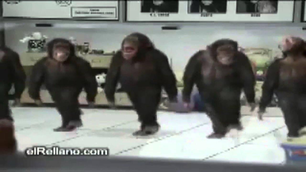 Dancing Birthday Happy Birthday Monkey Dances