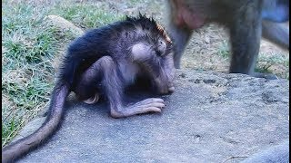 Looks like Convulsion, What have problem happen little baby monkey? Where her mom?