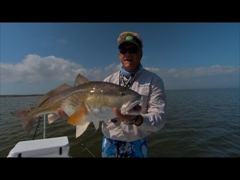 Bodacious Bulls - REDFISH fishing in Louisiana