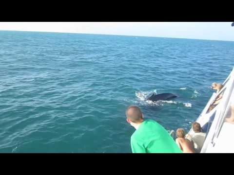Awesome Humpback Whale Encounter
