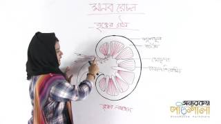 02. Structure of the Kidney | বৃক্কের গঠন | OnnoRokom Pathshala