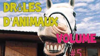 Meilleur Rigolo Animaux Compilation Novembre 2014 Édition [NEW HD]