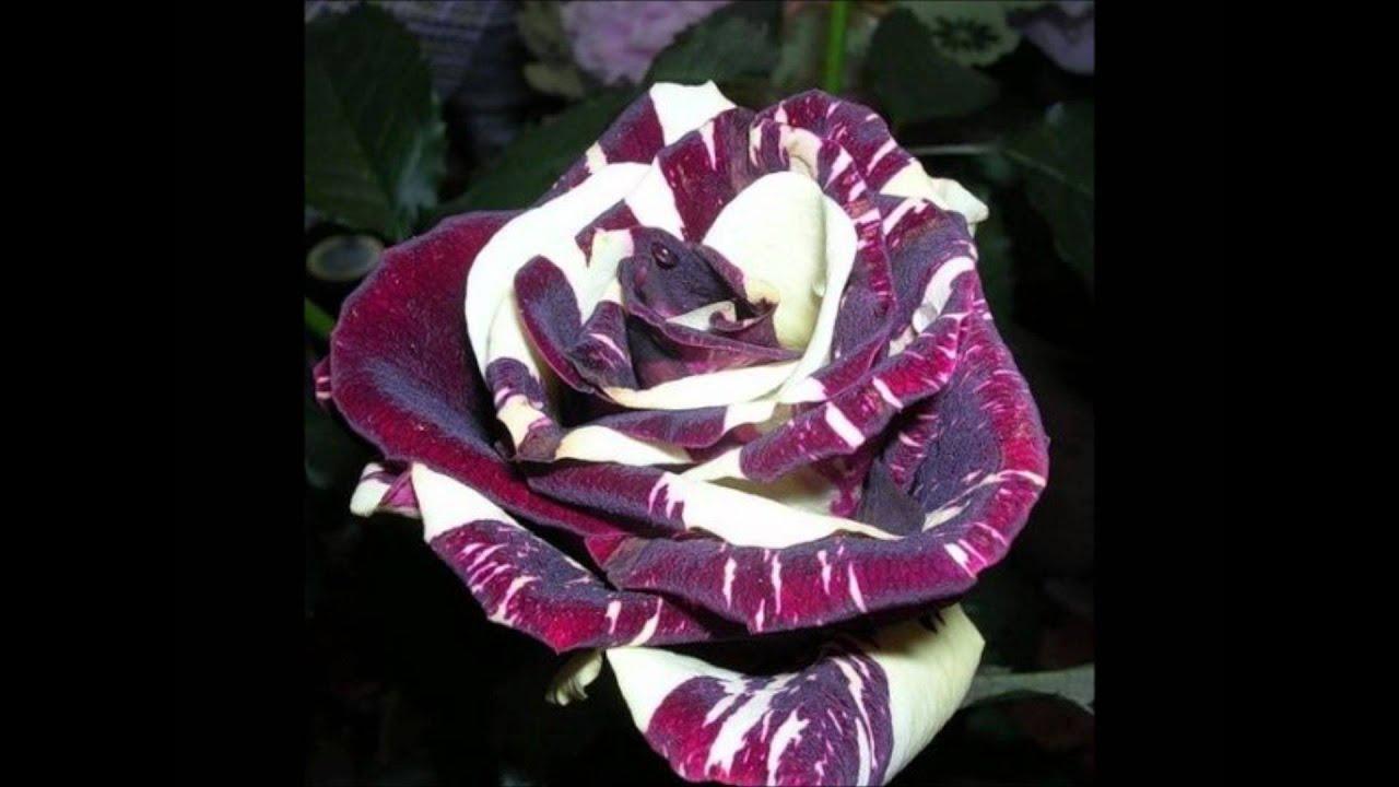 цветы фото комнатные необычные цветы: