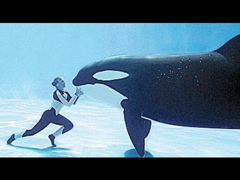 expert-whale-trainers-attacked-in-blackfish.html
