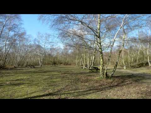 Great Wood Country Park St Albans Hertfordshire