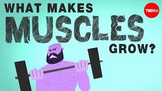 What makes muscles grow? - Jeffrey Siegel