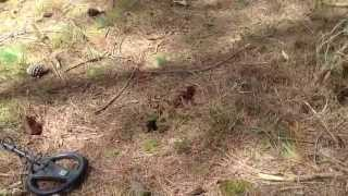 Metal Detecting a Nazi medal in the woods UK (14)