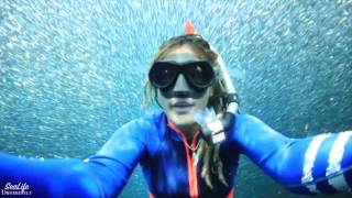Photographer Swims Through Huge Bait Ball at Ningaloo Reef