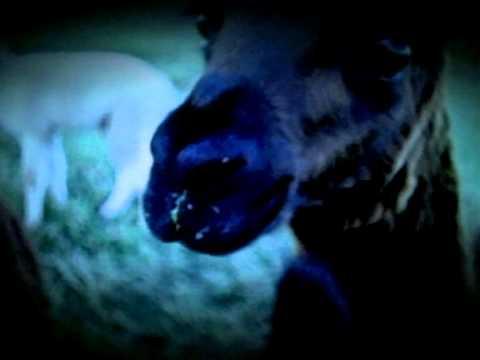 Silverchair - Tomorrow