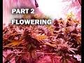 How I GROW SHORT BUSHY Cannabis Plants FLOWER mp3