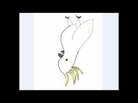 Emisiones Cacatúa - Pono Lorte #18