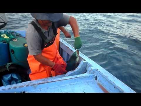 pesca mortal loco neri (atico - peru)
